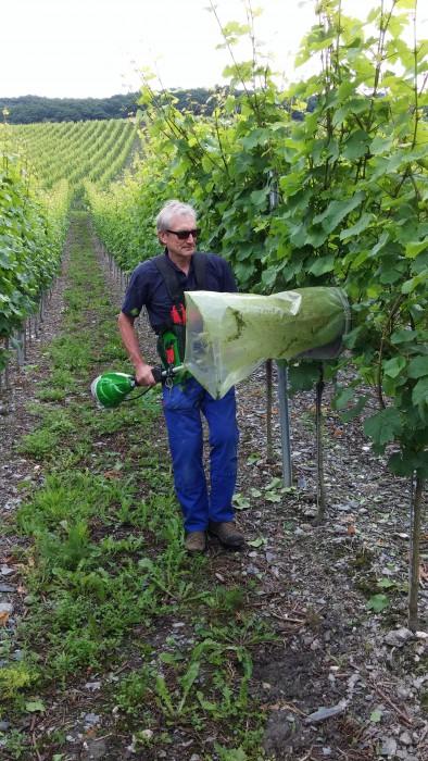 Arbeit im Weinberg 2016 Weingut Roussel