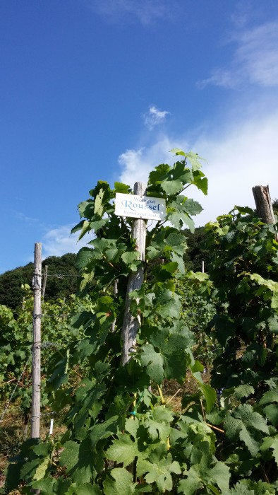 Weinstöcke Weingut Roussel