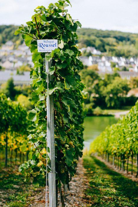 Vendanges dans la vallée de la Moselle