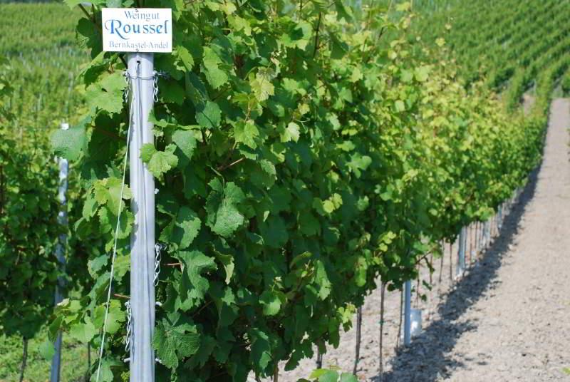 Weingut Roussel 06