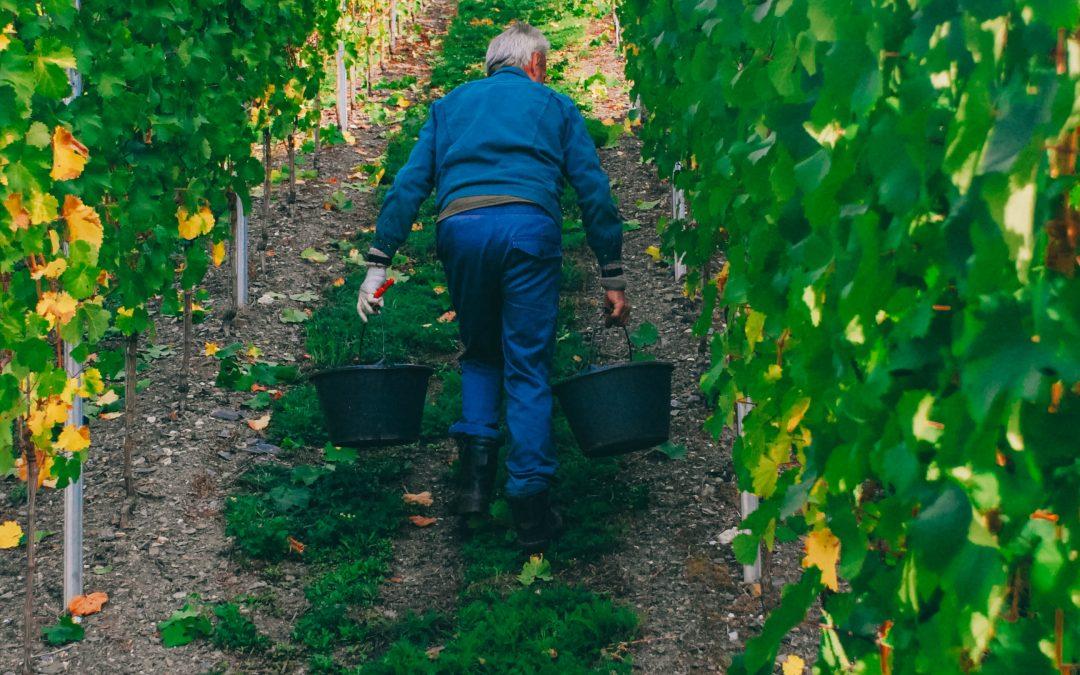 Dégustation commentée chez viticulteur