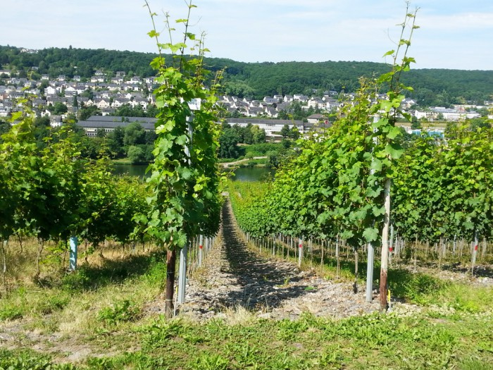 Matheisbildchen in Bernkastel Juni 2015 Weingut Roussel